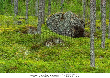 Big rock in forest landscape from eastern Finland