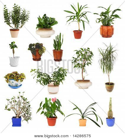 many different houseplants in pots isolated on white poster