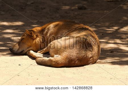 photo of a feral dog in India resting in the shadows