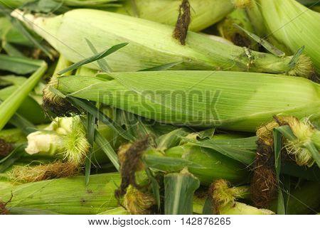 green corncob at the market full view