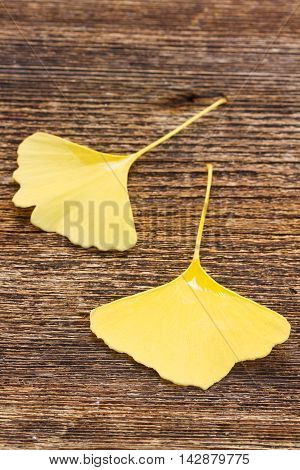 Fall fresh yellow leaves of ginkgo biloba on wooden background