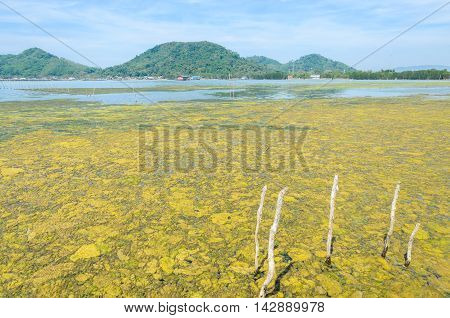 Algal bloom in a tropical ocean and fishing village Thailand