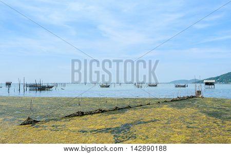 Algal bloom in a tropical ocean and marine fish farming Thailand