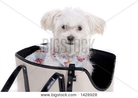 Puppy_Carrier