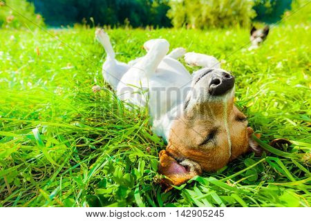 Dog Siesta At Park
