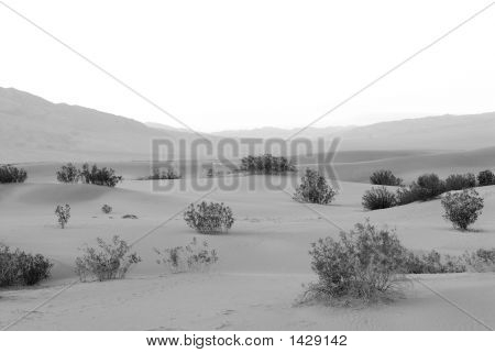 Sand Dunes At Death Valley California Usa