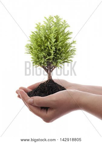 Growing green tree in hands isolated on white background