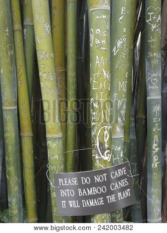 Gainesville, Florida-june 26, 2017: These Wong Chuk, Or Royal Bamboo, Canes Have Been Carved With Gr