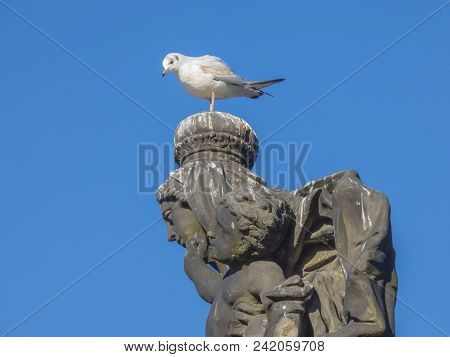 Seagull Sitting On Stone Statue Head On Charles Bridge, Prague, Czech Republic