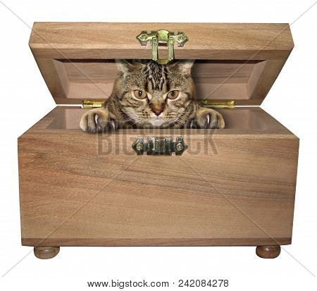 The Smart Cat Hid Inside The Wooden Box. White Background.