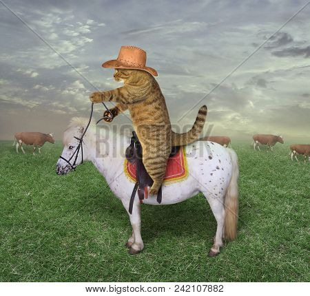 The Cat Cowboy On A Horse Grazes His Cows.