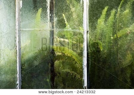Ferns Behind Glass