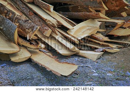 Cutting Boards Waste Wood Industry