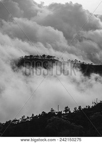 Forest. Mountain Forest Landscape. Misty Mountain Forest. Fantastic Forest Landscape. Mountain Fores