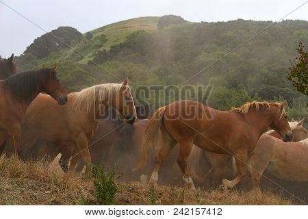 Many Wild Horses Running Down The Side Of A Hillside In Early Morning Light, Kicking Up Dust, Green