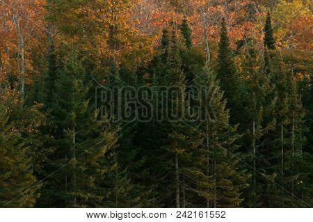 Autumn Trees At Sunset.  Mackinac Island, Mi, Usa.