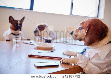 Three Dogs Dressed As Businessmen Having Meeting In Boardroom