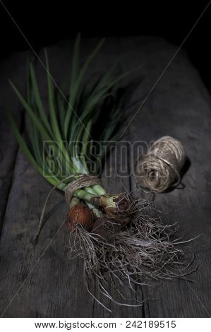 A Bunch Of Green Onions With A Root On A Wooden Background, Decorated With A Textile Towel And A Ske
