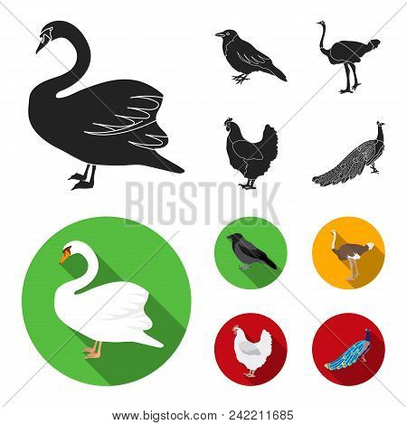 Crow, Ostrich, Chicken, Peacock. Birds Set Collection Icons In Black, Flat Style Vector Symbol Stock