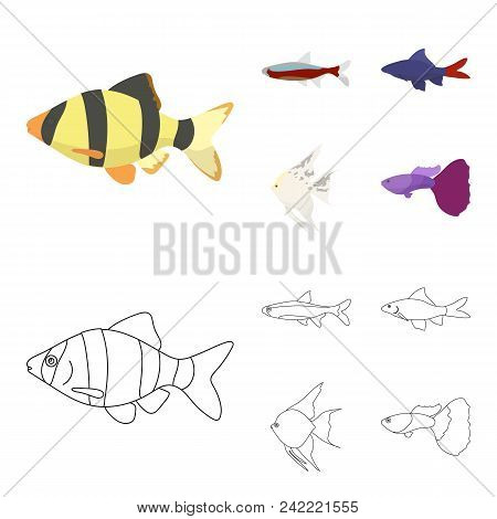 Angelfish, Common, Barbus, Neon.fish Set Collection Icons In Cartoon, Outline Style Vector Symbol St
