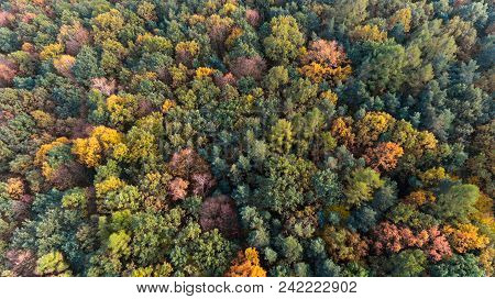 Autumn Colorful Forest Aerial Drone Top View