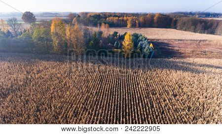 Aerial Drone View From Above Of Corn Field After Harvest And Trees