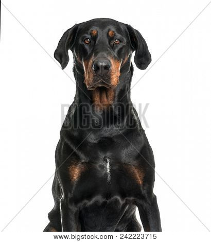 Mixed-breed dog looking at camera against white background