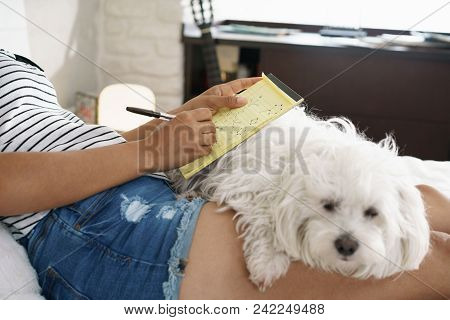 African American College Student Doing Homework In Bed With Dog On Legs. Woman Preparing School Test