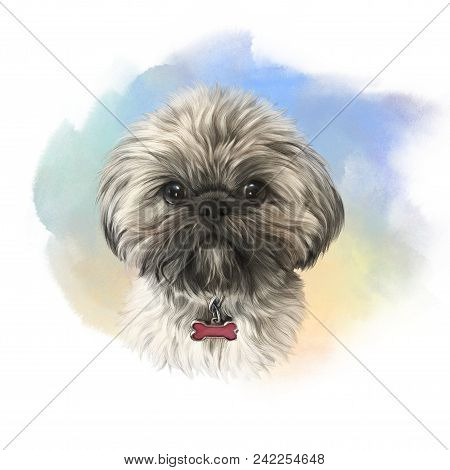 Shih Tzu Or Chrysanthemum Dog. Realistic Portrait Of A Cute Puppy On Watercolor Background. Animal A