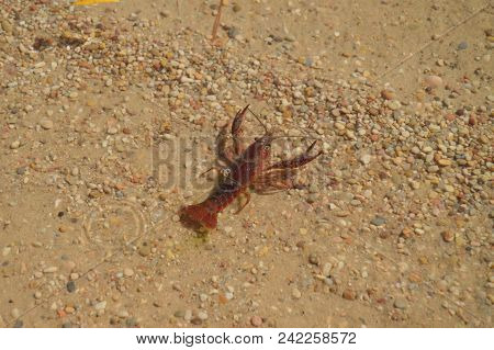 Beautiful River Beach In The Tagus River With A Beautiful River Crab As It Passes Through The Sierra