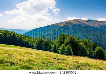Beautiful Landscape Of Carpathian Mountains. Forested Hills And Apetska Mountain In The Distance In