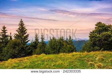 Forested Hills Over The Brustury Valley At Dusk. Gorgeous Mountainous Landscape, Transcarpathia, Ukr
