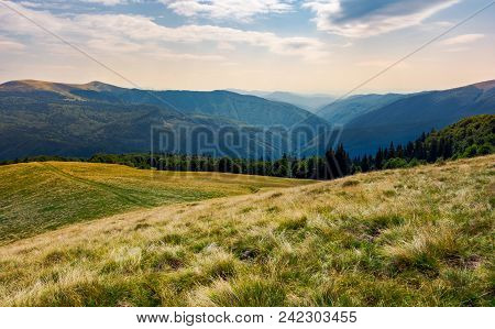 Grassy Meadow On Forested Hillside Of Carpathians. Lovely Summer Landscape In Mountains. Location Ne
