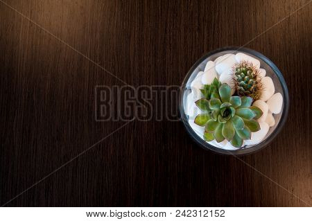 Miniature Cactus Succulent Plant In A Glass Vase With White Gravel. Selective Focus