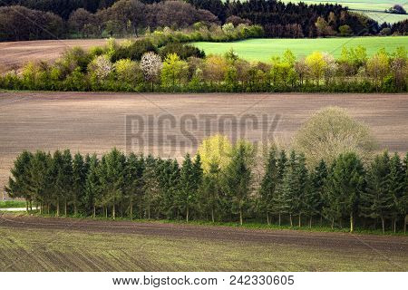 Rural Field Separated By Small Pine Tree Forests Seen From Above