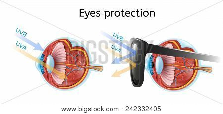 Eyes Protection Vector Infographic With Human Eyeball Anatomical Structure In Cross Section View Com