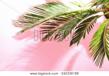Summer Tropical Travel Concept, The Sun Is Shining Brigtly On A Bunch Of Palm Leaves, Palm Leaves Sh