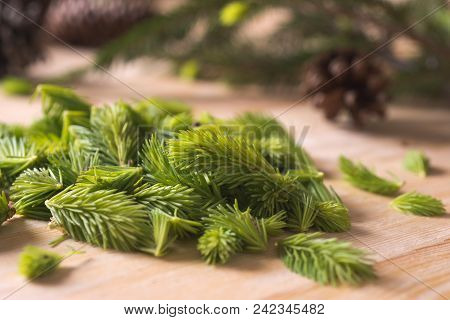 Bud Spruce On Wood