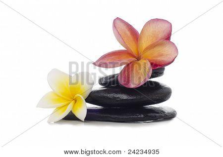 frangipani flowers and black stones