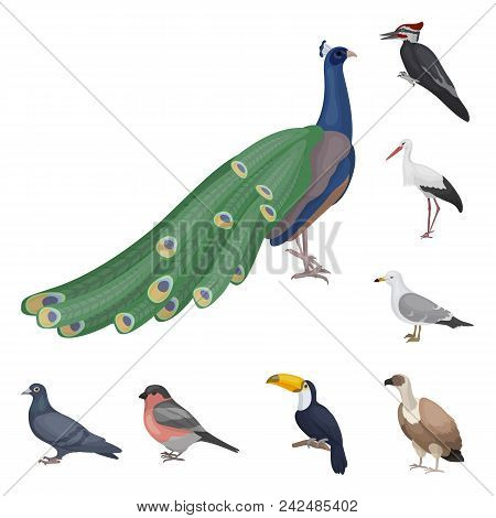 Types Of Birds Cartoon Icons In Set Collection For Design. Home And Wild Bird Vector Symbol Stock  I
