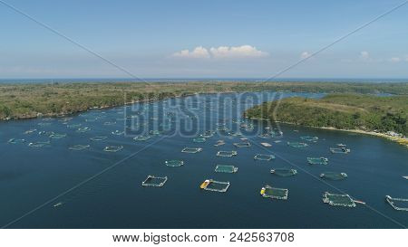 Fish Farm With Cages For Fish And Shrimp In The Philippines, Luzon. Aerial View Of Fish Ponds For Ba