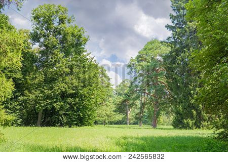 Glade Covered With Grass Among Of The Conifers And Deciduous Trees In The Park Against Of The Sky In