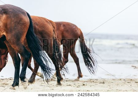 Three horse rumps in a row on the beach in a close up. Equine croups and tails. poster