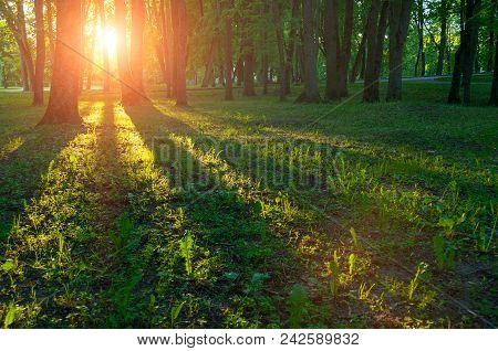 Spring Landscape, Colorful Spring Nature In Nice Sunny Weather At Spring Sunset. Spring Sunset Light