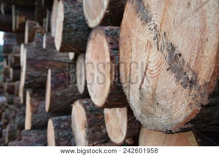 Wood Trunks Stacked In Old Farm Getting Ready For The Winter