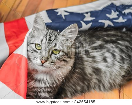 The Grey Striped Cat Is Resting Patriotically On The Star-striped American Flag. A Celebration Of Am