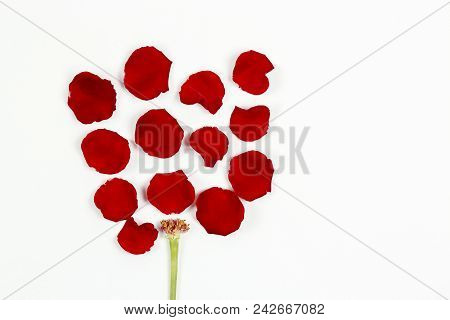 Rose Petals And Stem Forming A Rose Flower On White