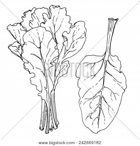 Chard Images Illustrations Vectors Free Bigstock