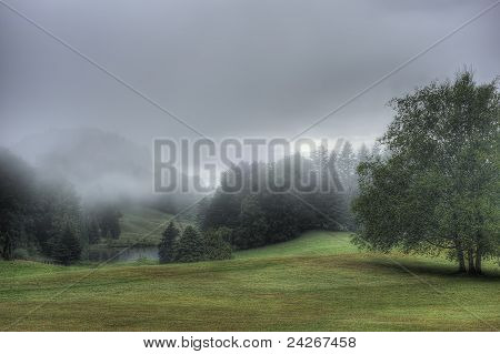 Misty Park Setting With A Large Tree