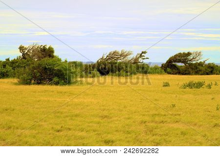 Windswept Desolate Landscape Including Trees Shaped From The Wind With The Pacific Ocean Beyond Take
